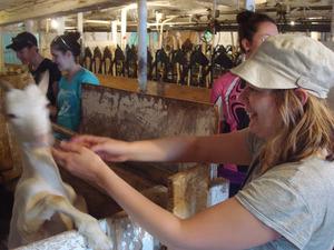 claremell goat farm